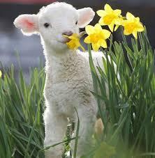 メリーランド州での生活 Maryland メリーランドの子羊をよろしくお願い ...