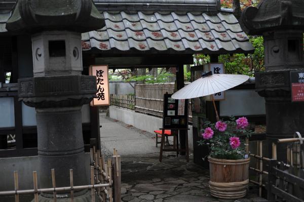上野東照宮ぼたん1