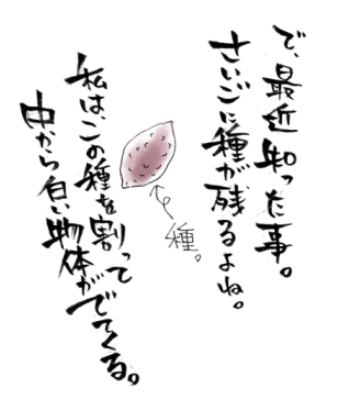 maruma0904.jpg