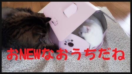 2014-03-21-22-56-02_deco.jpg