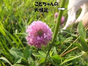 DSCF5575.jpg