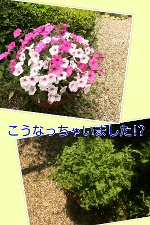 fc2_2014-05-27_21-08-47-802.jpg