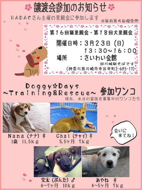 image140323satooyakai-for-dd-dogs.jpg
