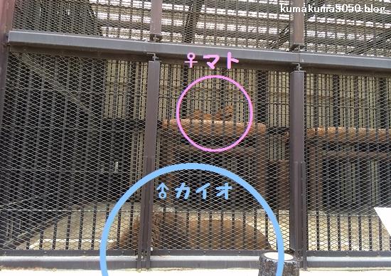 姫路市立動物園_8