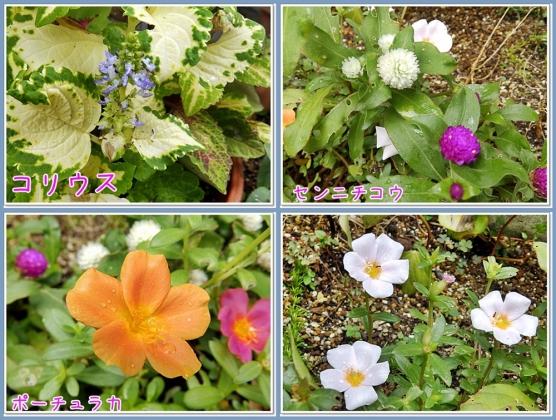 雨上がりの花たち