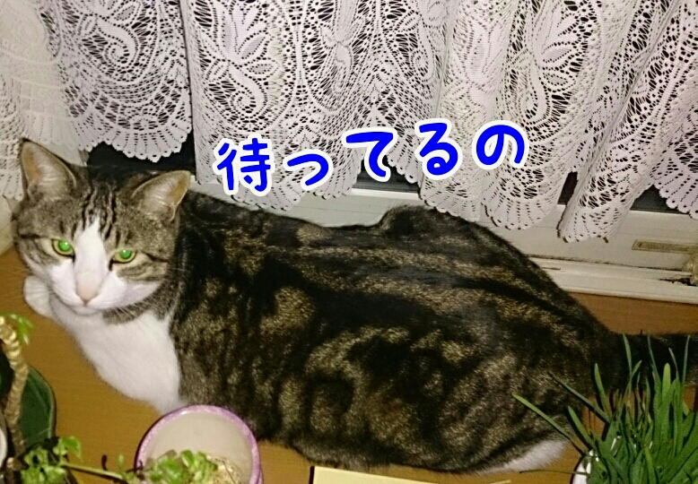 fc2_2014-03-28_20-03-14-551.jpg