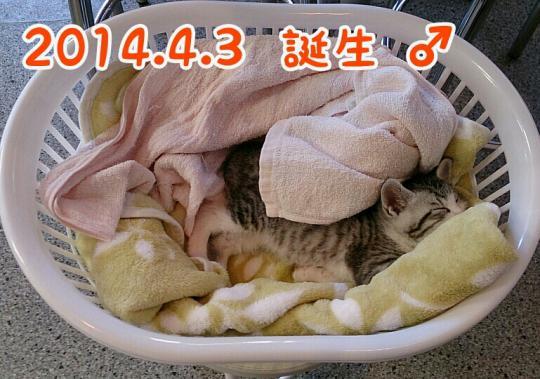 fc2_2014-05-10_20-54-37-228.jpg