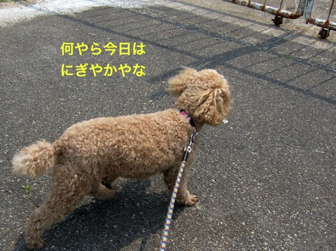 th_IMG_7155-1.jpg