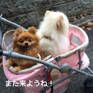 fc2blog_20140725210459819.jpg
