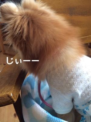 fc2blog_20140826200423f0c.jpg