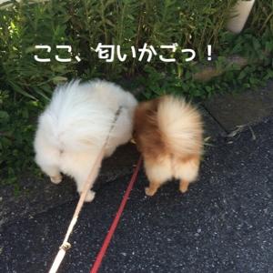 fc2blog_20140903220349510.jpg