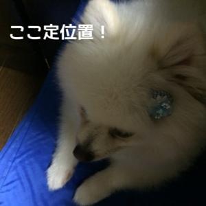 fc2blog_2014090419382136b.jpg