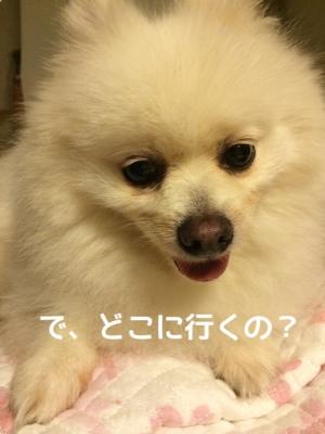 fc2blog_20140911192545d28.jpg