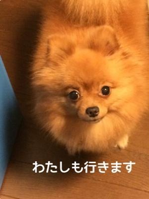 fc2blog_201409111930338c5.jpg