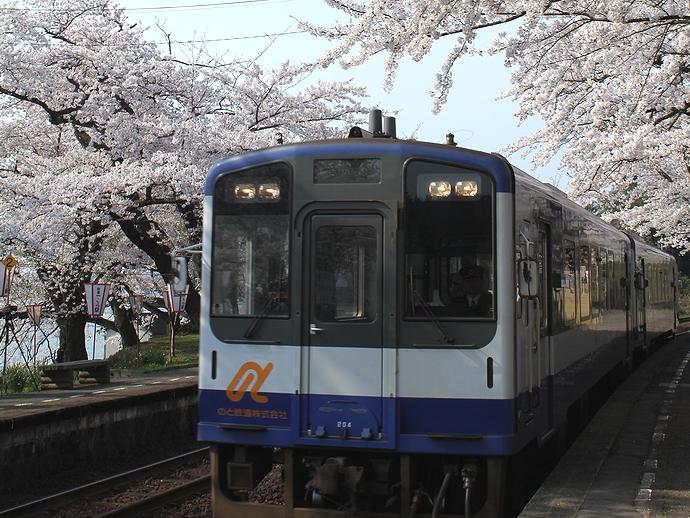 桜満開の能登鹿島駅 汽車とのコラボ