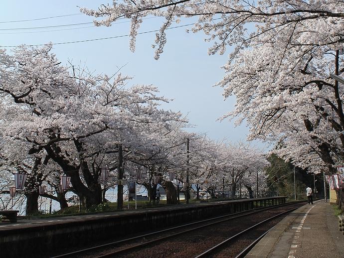 能登さくら駅(能登鹿島駅) 満開の「桜のトンネル」