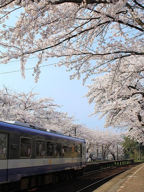 能登鹿島駅 桜のトンネルに止まるのと鉄道