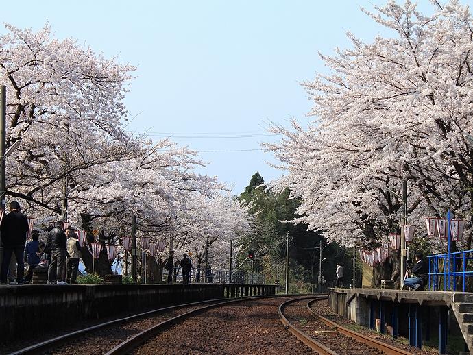 桜満開の能登鹿島駅