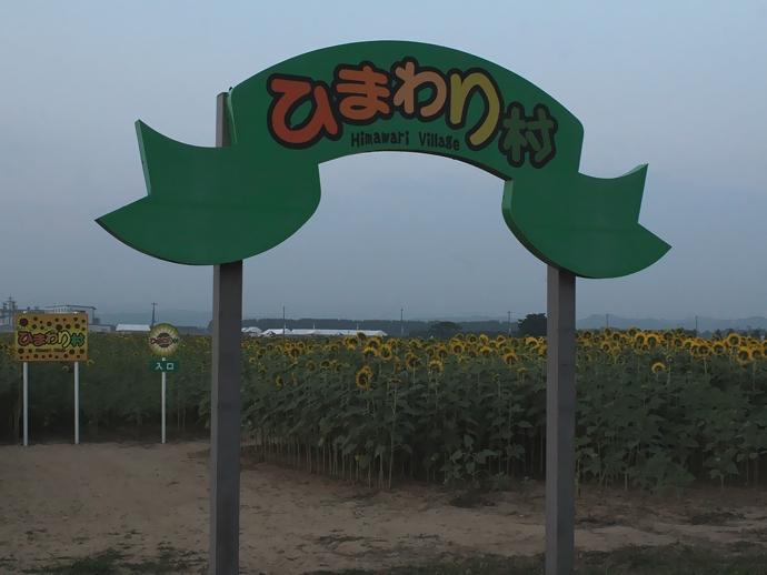 夕暮れのひまわり村(津幡町)