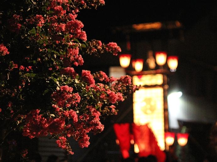 輪島大祭 キリコを見守るサルスベリの花