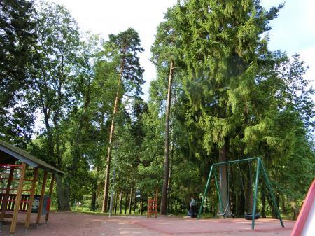 sibeliuksen puisto7