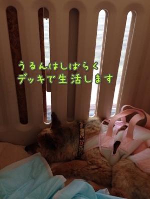 fc2blog_20140421100525cc2.jpg