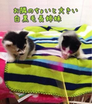 fc2blog_2014042321135226b.jpg