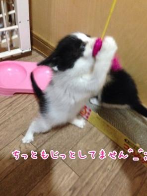 fc2blog_20140423211547612.jpg