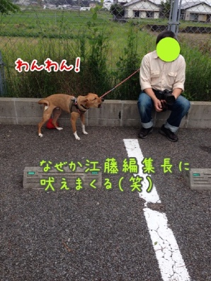 fc2blog_201405181936516bc.jpg
