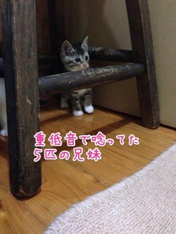 fc2blog_20140530231214cad.jpg