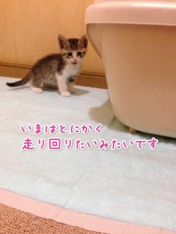fc2blog_201405302312387b5.jpg
