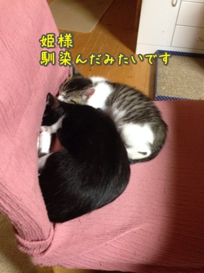 fc2blog_20140720215350189.jpg