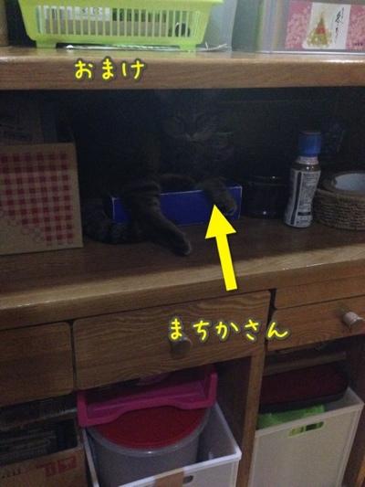 fc2blog_201407202157288db.jpg