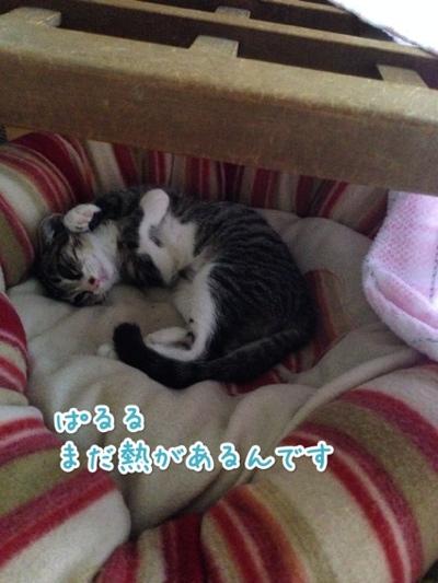 fc2blog_20140721142114488.jpg
