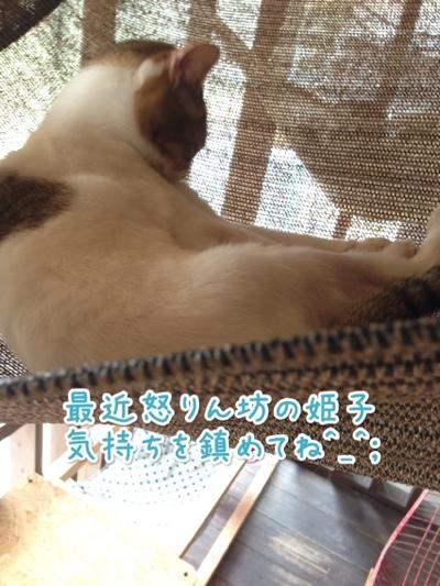 fc2blog_20140721142519201.jpg
