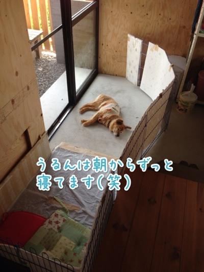 fc2blog_20140721142628a4f.jpg