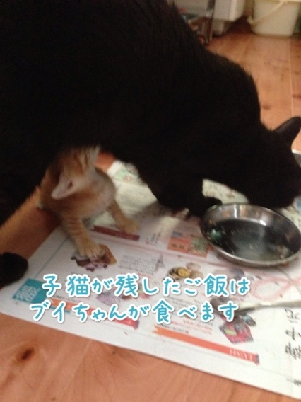 fc2blog_20140726221933d03.jpg