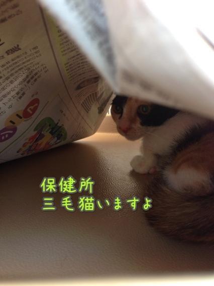 fc2blog_201407271615197ca.jpg