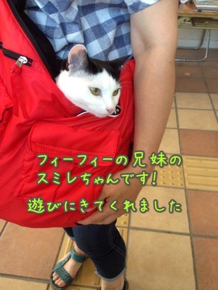 fc2blog_201407271621330cd.jpg