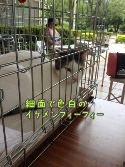 fc2blog_20140824221522d5a.jpg