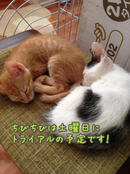fc2blog_20140824222308f33.jpg