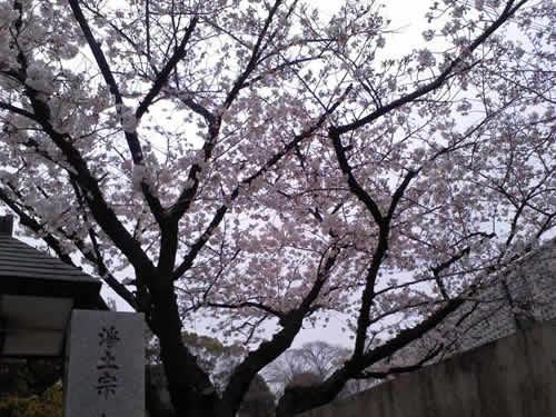 20140329_3.jpg