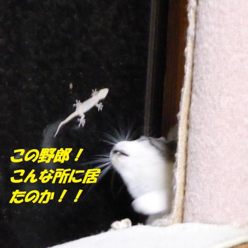 P1010492_convert_20140829131300.jpg