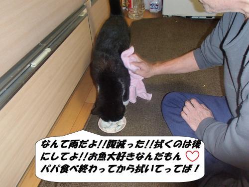 P3131083_convert_20140314073229.jpg