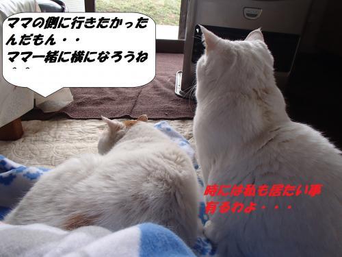 P3201166_convert_20140321075649.jpg