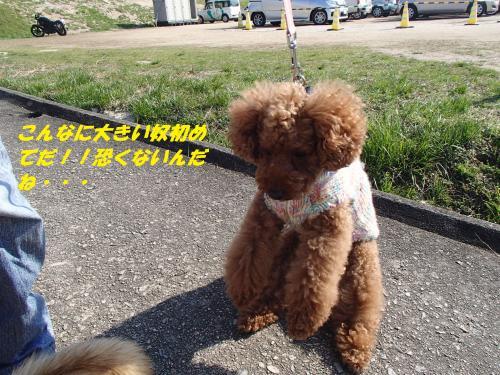 P4020170_convert_20140404083655.jpg
