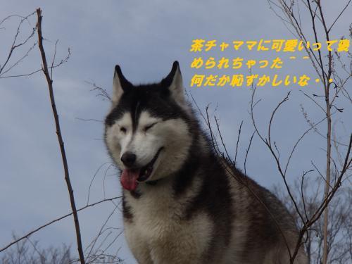 P4070249_convert_20140408093741.jpg