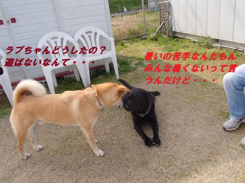 P4120338_convert_20140414101627.jpg