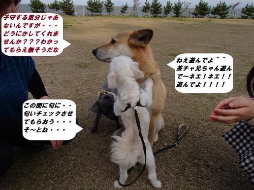 P4120345_convert_20140414101740.jpg