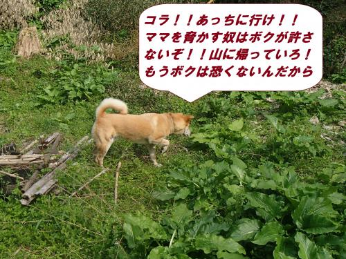 P4170481_convert_20140418094713.jpg